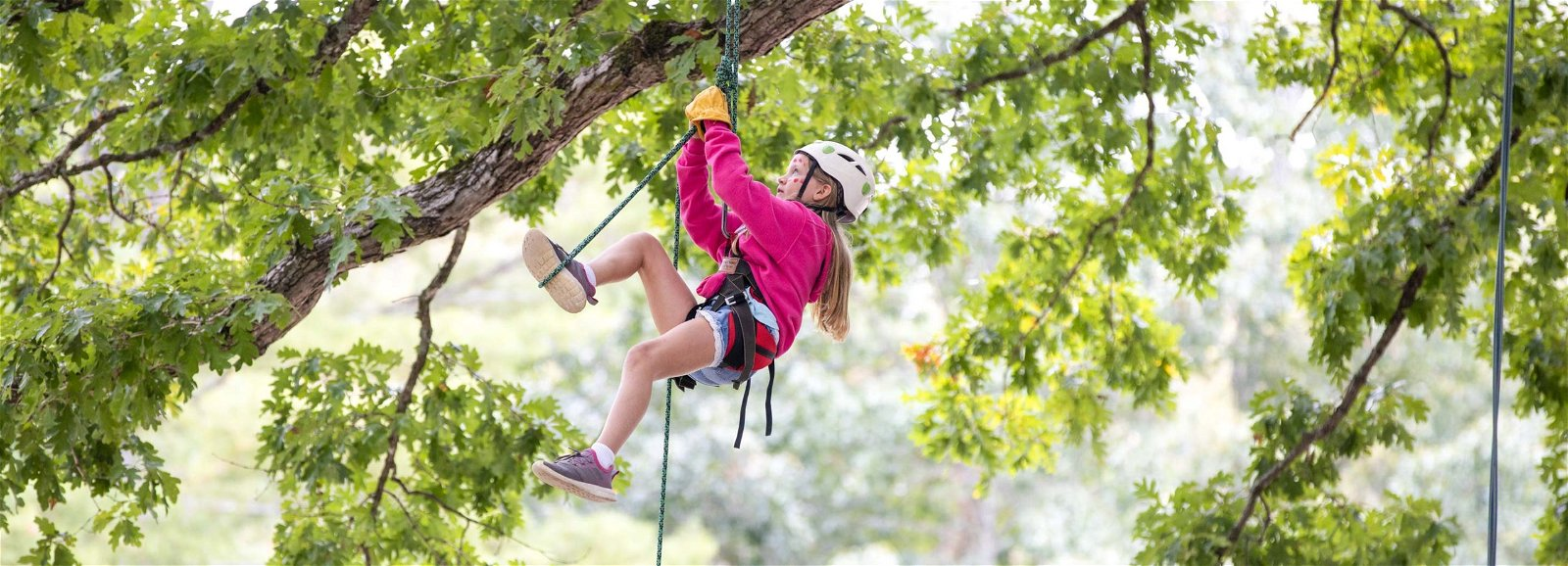 Young girl climbing up a tree in a harness