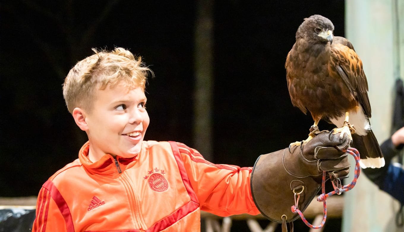 Boy holding a falcon and wearing a glove
